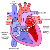 1044px Diagram of the human heart hu svg